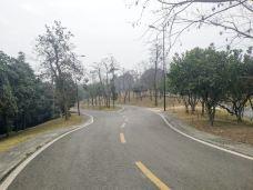 凤凰山公园-成都-山茶叶蛋糕