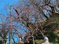 万寿园景区-三清山-chenaoao520