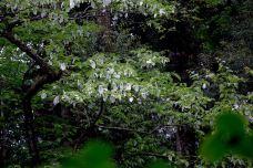 龙苍沟叠翠溪景区-荥经-有朵那