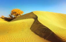 塔克拉玛干沙漠(巴音郭楞)-巴音郭楞-doris圈圈