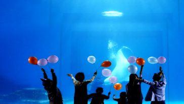 小梅沙海洋世界 (15)