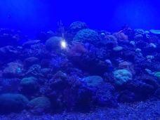 青岛海底世界-青岛