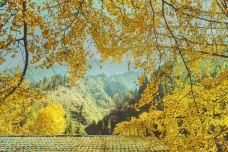 中国千年银杏谷-随州-H澍先生