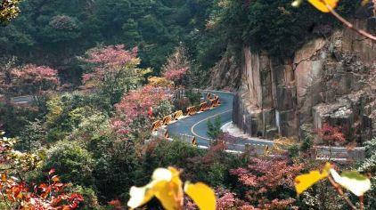 南岭国家森林公园8(新2016-11-11)