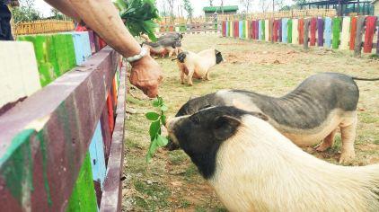 13-小猪