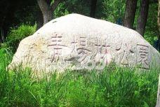 青杨公园-延吉-一个大橙子