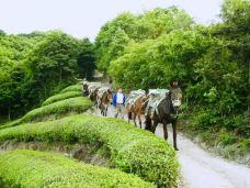 灵岩山-象山-LZH享受人生