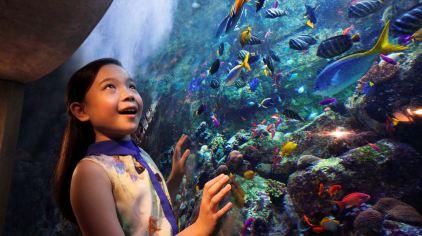 亚特兰蒂斯失落的空间水族馆 the lost chambers aquarium (1)