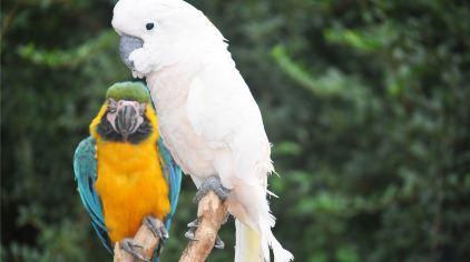 青岛森林野生动物世界13