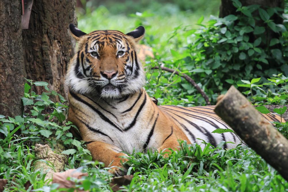 말레이시아 국립 동물원 입장권