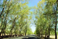 桦皮岭-张北-克克克里斯