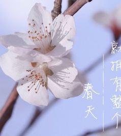 江苏游记图文-春日来信| 山河无恙,世间皆安,莫干山喊你来一场清肺自然之旅