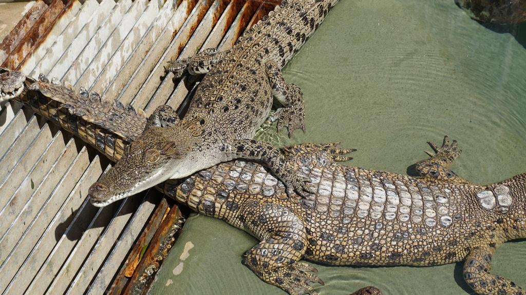 Darwin Attraction Combo: Crocosaurus Cove, Sunset Cruise, RFDS Tourist Facility & Big Bus