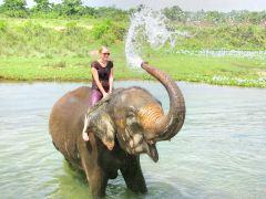 泰国清迈湄登大象营+坐牛车+兰花园+蓝庙一日游
