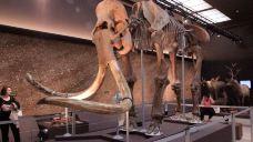 史前人类历史博物馆