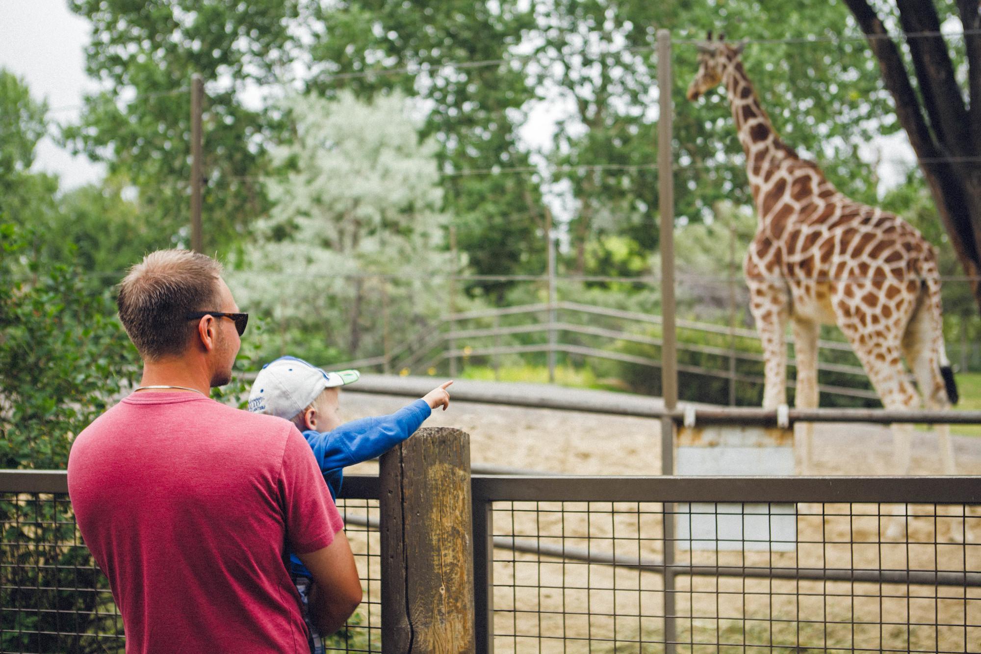 Calgary Zoo Ticket