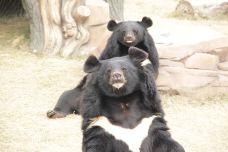 亚洲黑熊展区-南通-AIian