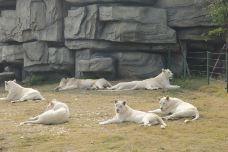 白狮展区-南通-AIian
