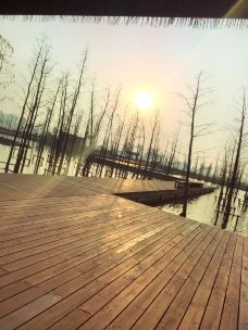 翠湖公园-铜陵-m82****25