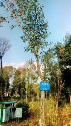 高黎贡山植物园-保山