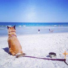 大西洋海滩-杰克逊维尔