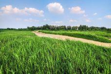 黄河森林公园-济南-M60****36