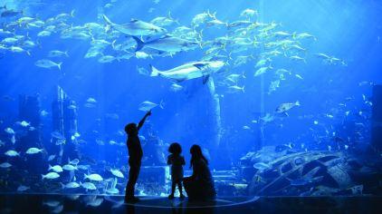 亚特兰蒂斯 marine & waterpark (6)