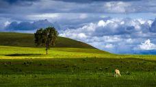 道图淖尔草原-锡林郭勒盟-一个大橙子