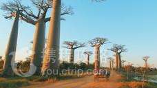 猴面包树大道