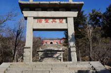 孔子庙-泰山-孟氏老树