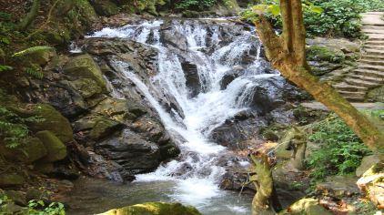 莫里熱帶雨林 (13)