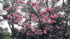 八重岳樱之森公园
