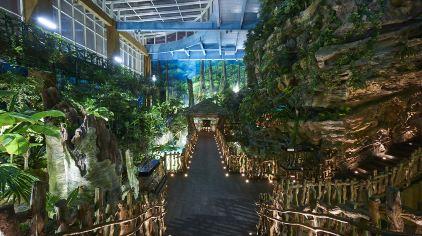 3、热带雨林 (1)