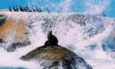 海豹岛-开普敦-Todyao