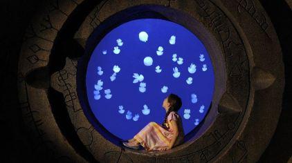 亚特兰蒂斯失落的空间水族馆 the lost chambers aquarium (5)