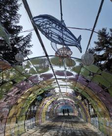 南湖公园-长春-未接来电2019