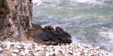 穆里怀塘鹅栖息地