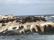 海豹岛-开普敦-M26****6425