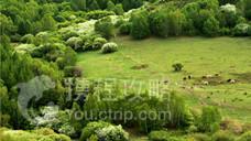 柳树沟森林公园
