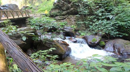 莫里热带雨林 (1)