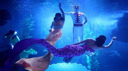 海底世界 (10)