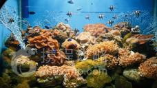 小梅沙海洋世界