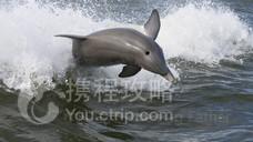 Dolphin Express Cruises