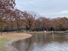 代代木公园-东京-黛西501