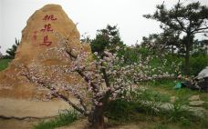 桃花岛风情园 (1)-桃花岛风情园-日照-傻桃子呦西