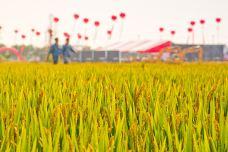 太湖稻米工厂音乐文旅嘉年华-苏州