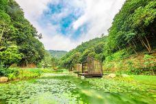 高峰森林公园-南宁-AIian