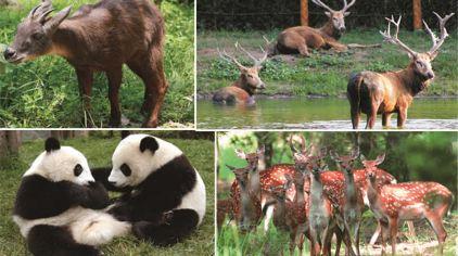 刘公岛动物园 (3)