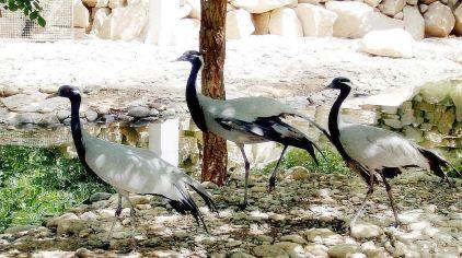 神州荒漠野生动物园8(新2016-9-7)
