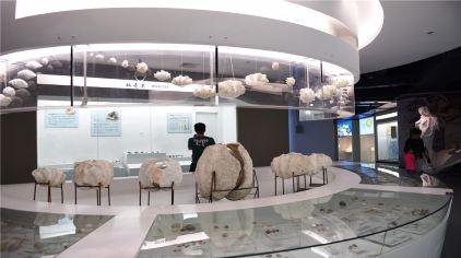 贝壳博物馆10